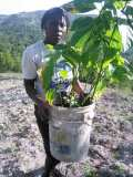 Plantation d'arbres à Gros-Morne en collaboration avec MyTree